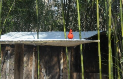 bright red cardinal in the snow on the birfeeding platform