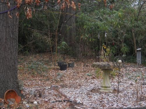 1213 backyard