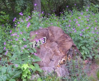 1213 street numbers with spring flowers