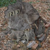 the house numbers, 1213, in Fall leaves