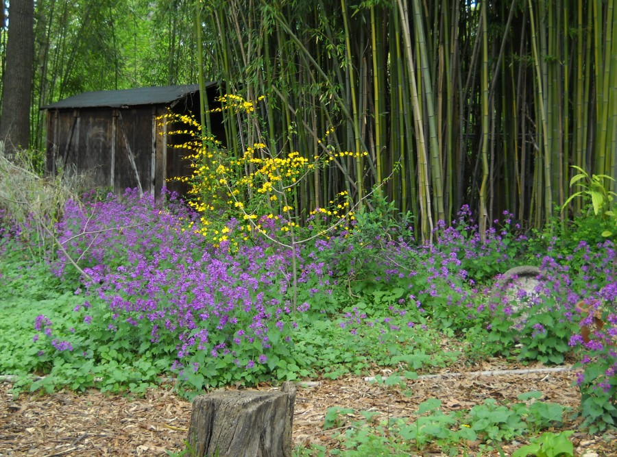 view of the back yard with flowers blooming in the shade, bamboo and the shed beyond