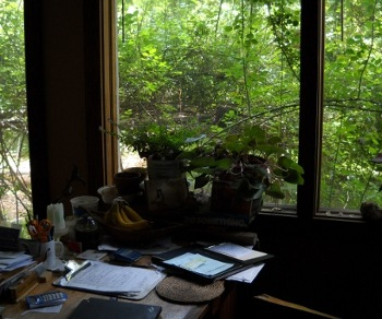my desk with the roses growing outside the window