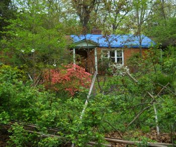 view of the front yard with flowers blooming, and the blue tarp on the roof standing out clearly