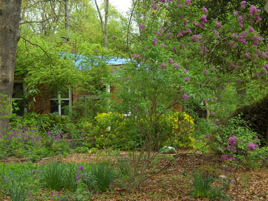 view of the front yard with flowers blooming, the house almost hidden in greenery